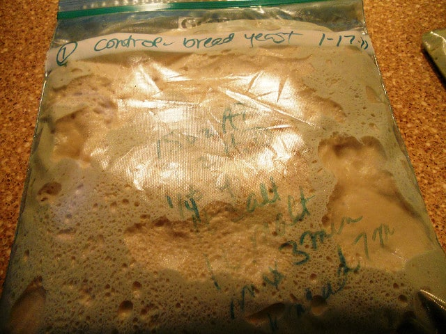 Another bag of bread dough rising on a counter with marker writing on it showing dates.