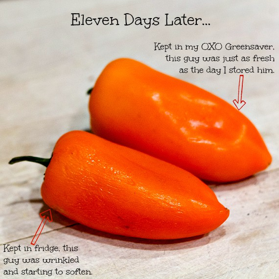 Two sweet peppers, one fresh, and one looking a little bit wrinkled. With a text overlay.