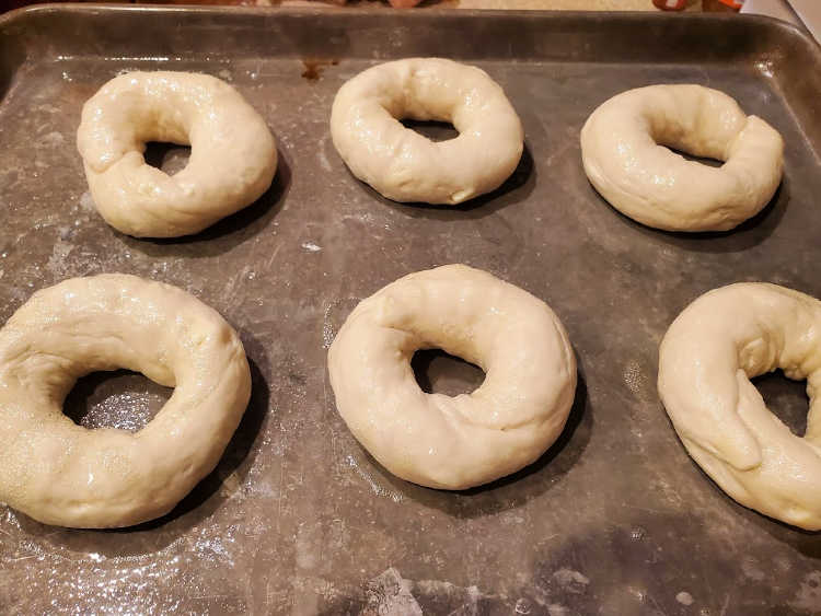 6 shaped bagels on a tray before baking.